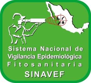 SINAVEF